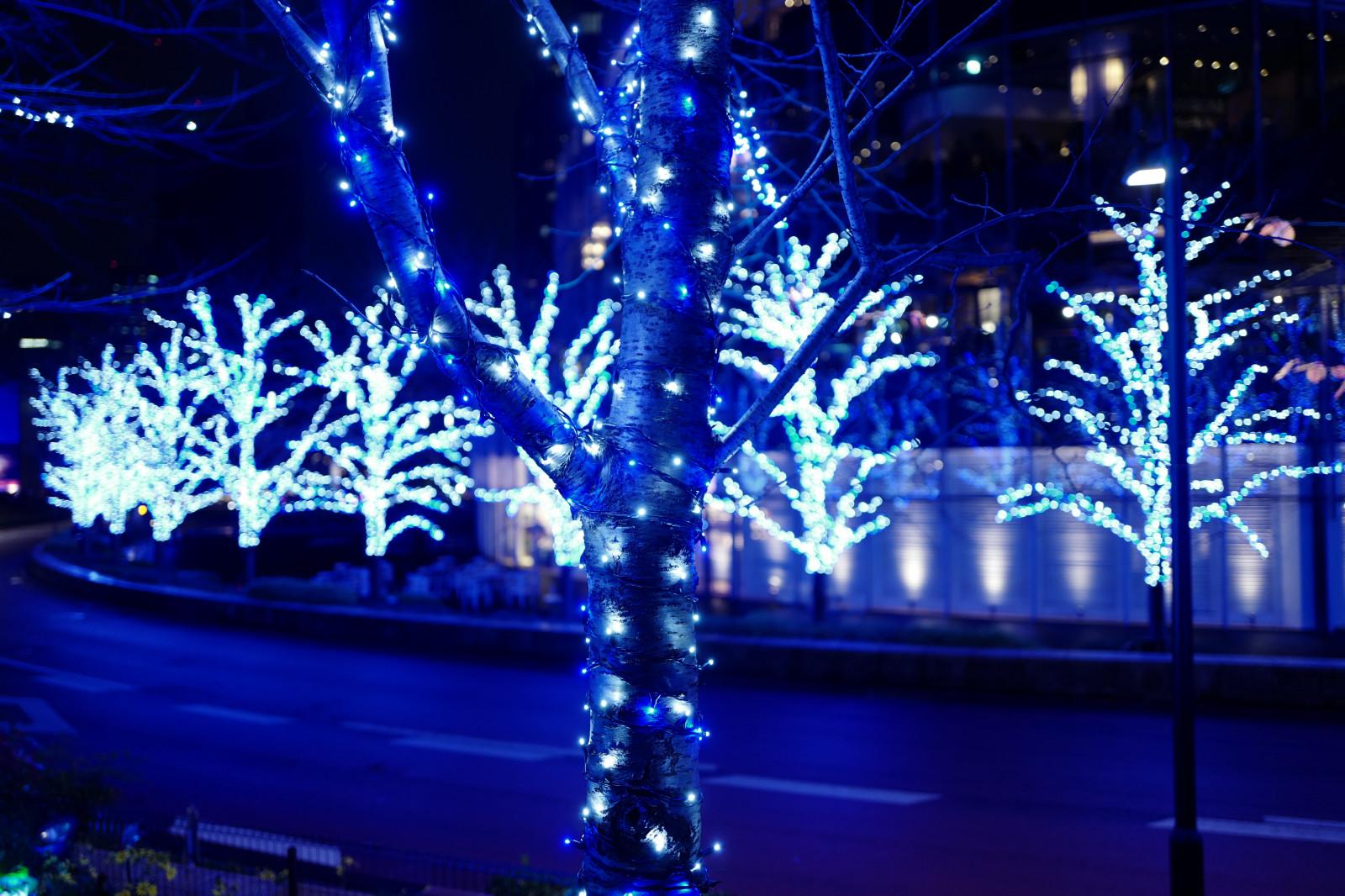 Fondos de pantalla  Japn noche rama rbol de Navidad
