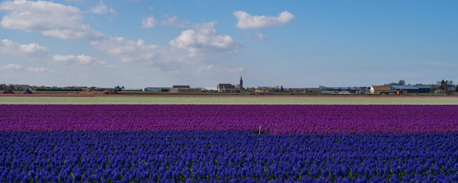 Hintergrundbilder  Leica Blumen blau Wei Holland Kirche Niederlande Niederlnder Feld