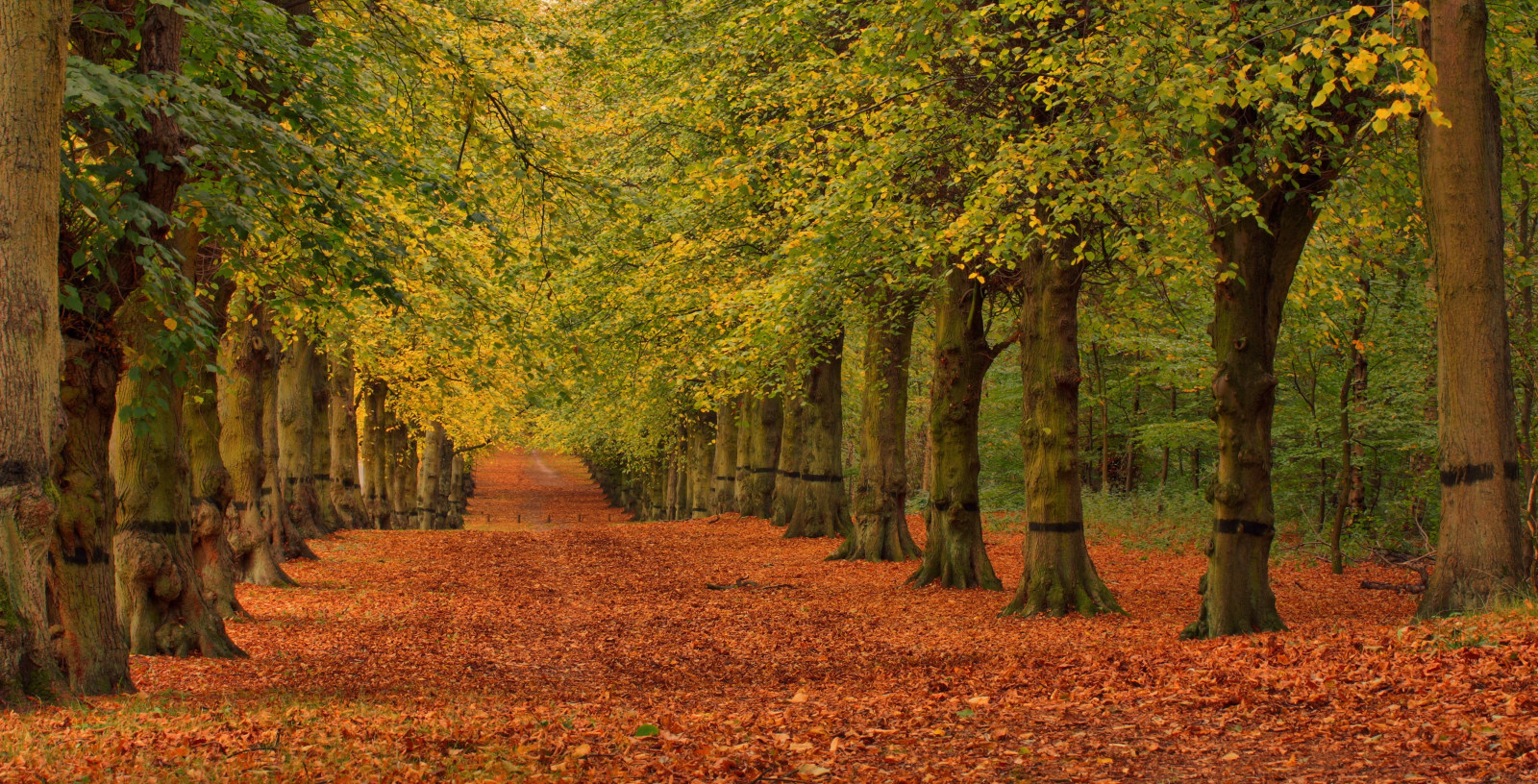 Hd Wallpaper Fall Leaf Change Wallpaper Sunlight Trees Fall Leaves Park England