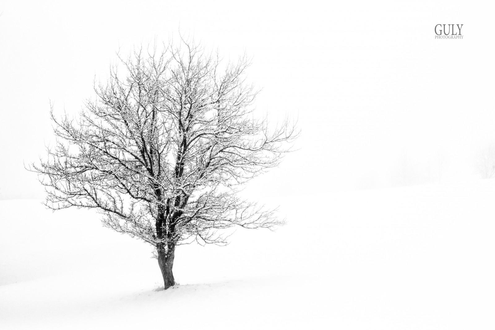 Fondos de pantalla : invierno, Blanco y negro, Bw, montaña