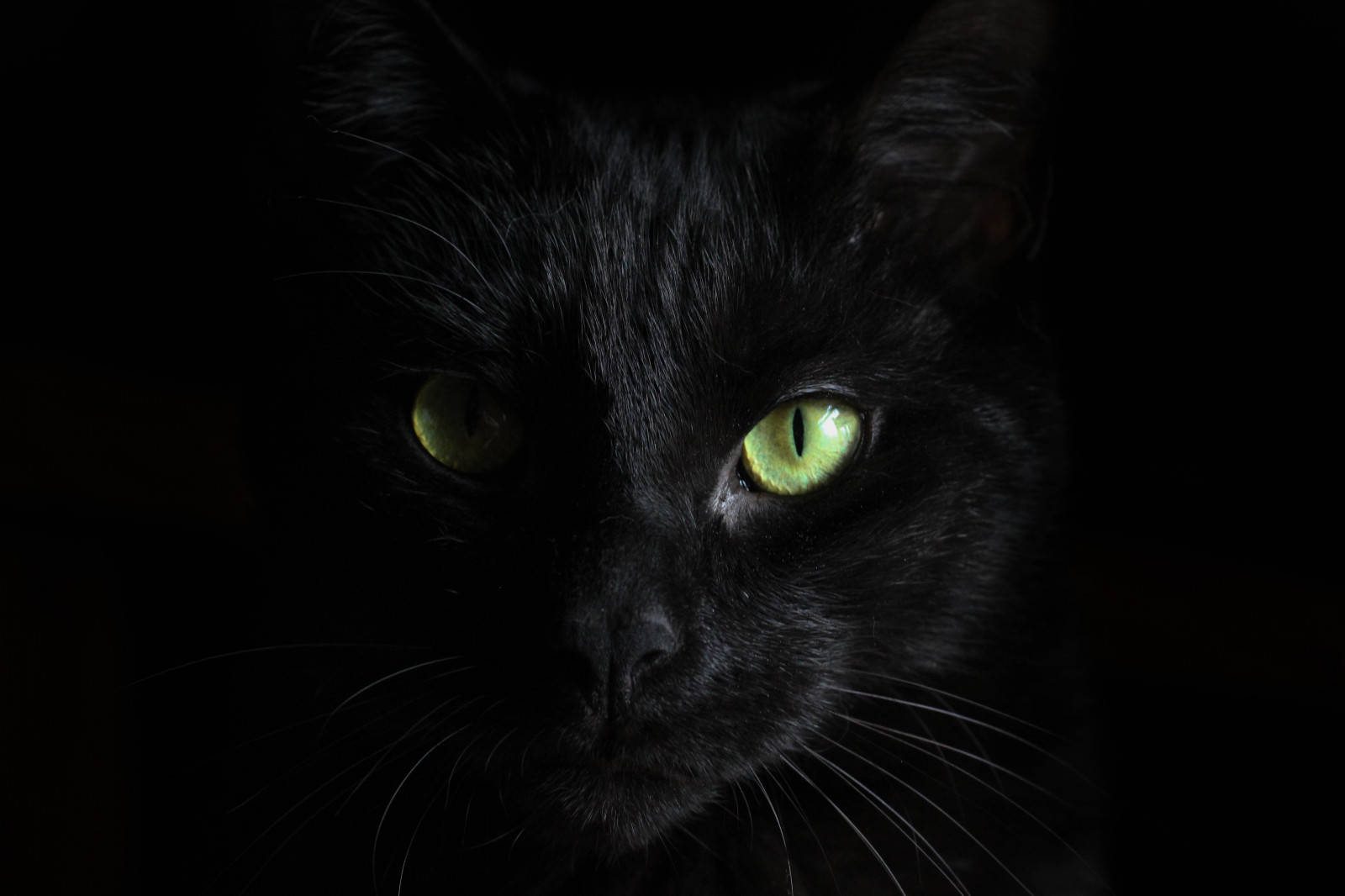 chat noir museau regardez 5184x3456