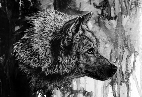 Fond 'cran Dessin Monochrome Loup Encre Esquisser
