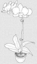 Floral design Petal Paper Product design orchids monochrome plant Stem plants png Klipartz