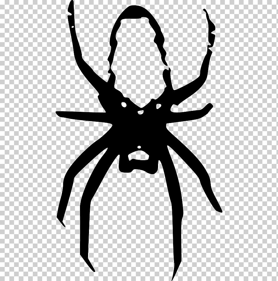 Spider Euclidean Spider Web Monochrome Fictional Character Cartoon Png Klipartz