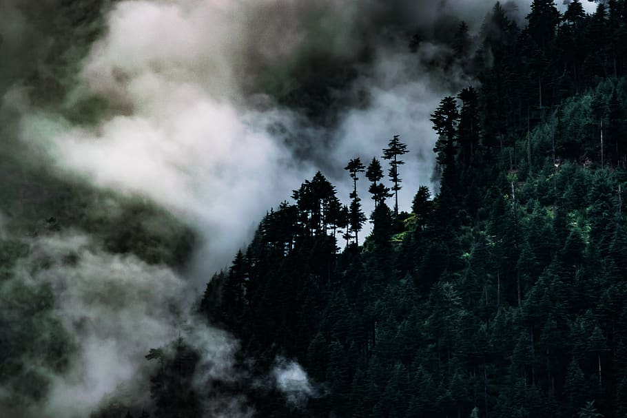 Since the turn of the 20th century, its range is restricted to gir national park and the surrounding areas in the indian state of gujarat.historically, it inhabited much of the middle east to northern india. Hd Wallpaper India Manali Fog Mist Trees Mountains Forest Plant Beauty In Nature Wallpaper Flare