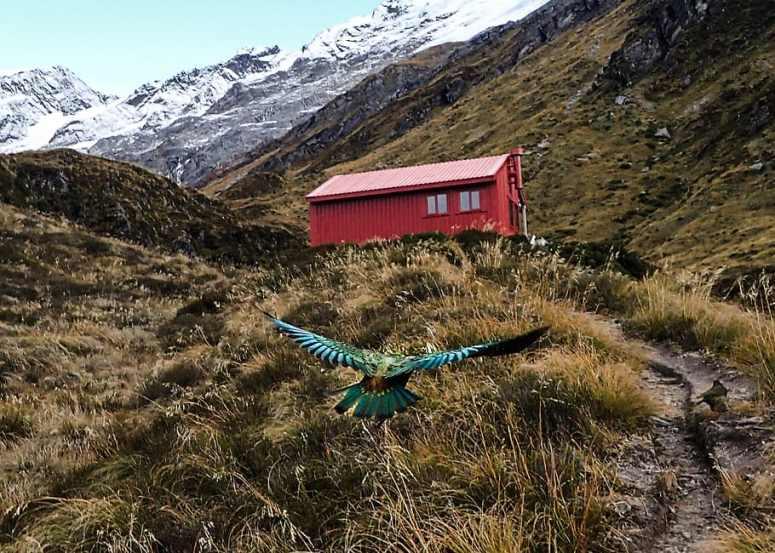 HD wallpaper: new zealand, mount aspiring national park, liverpool hut,  newzealand   Wallpaper Flare