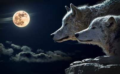 4800x900px free download HD wallpaper: two brown wolves illustration wolf predator full moon clouds Wallpaper Flare