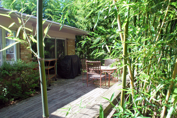 Back deck surrounded by invasive bamboo plants
