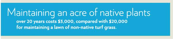 native plant savings