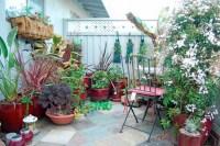 Patio Container Water Garden Ideas - Native Home Garden Design