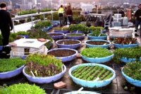 How To Build A Rooftop Community Garden | Rooftop ...