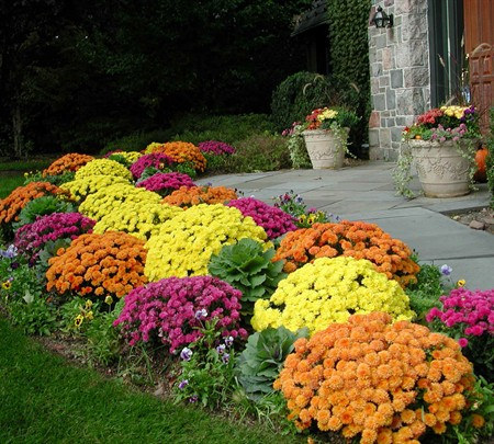 fall blooming perennial plants