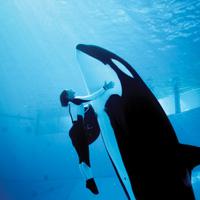 SeaWorld Adventure Park San Antonio