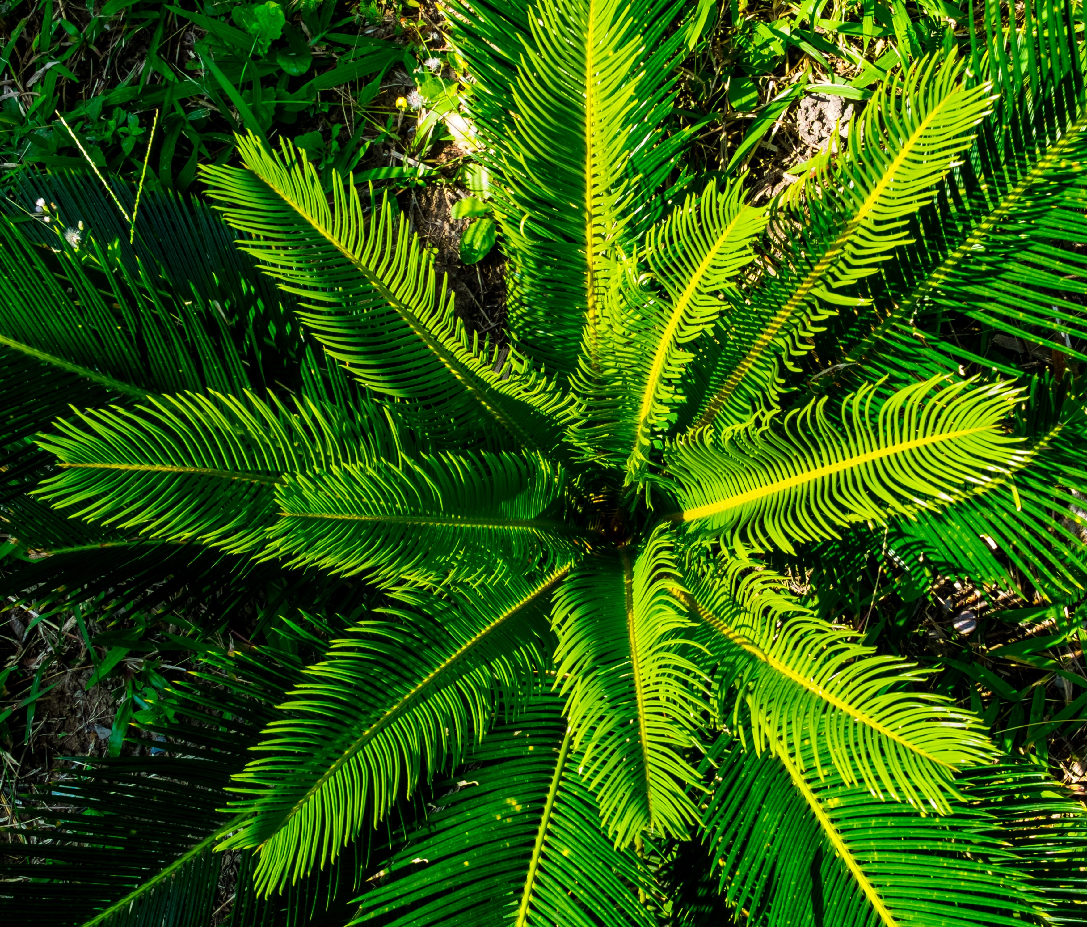 Download Wallpaper 3d 1366x768 Close Up Photography Of Green Sago Palm Free Image Peakpx