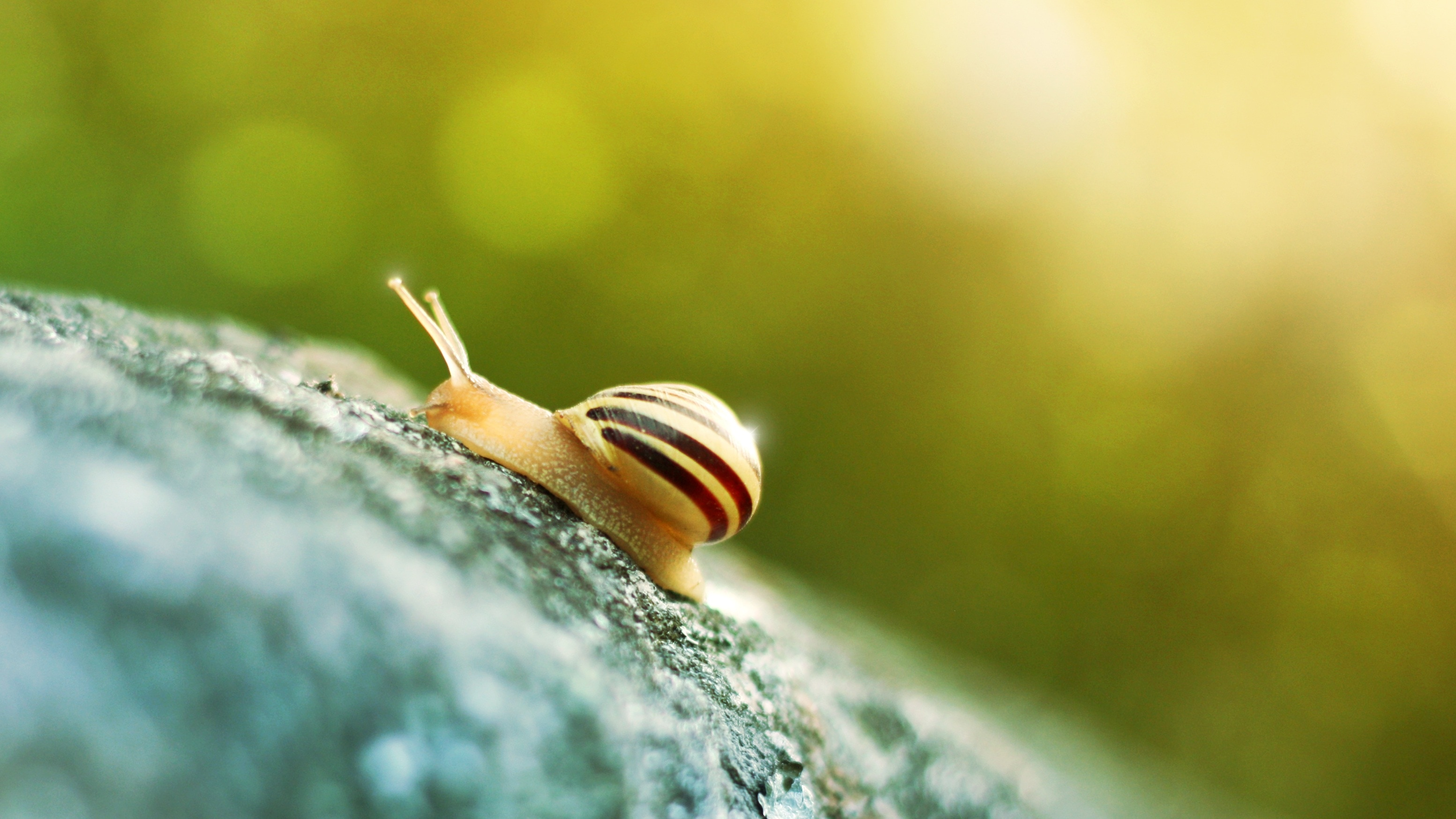 Free Summer Wallpaper Cute Beige And Black Snail Free Image Peakpx