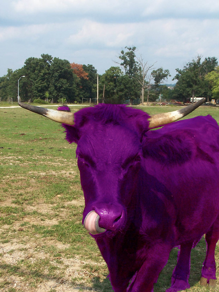 purple cowfor photoshop tennis group  THE PURPLE COW by