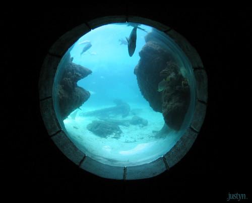underwater window  taken at the aquarium at the atlantis