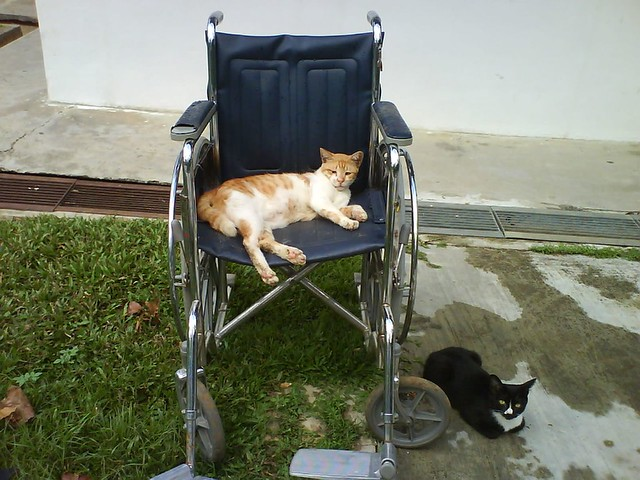 wheelchair for cats plastic chair rail cat on took this picture at east coast park it flickr
