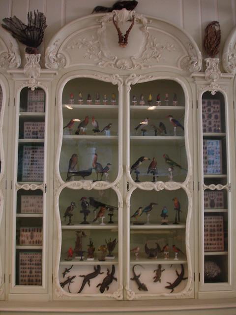 Le cabinet de curiosité de Bonnier de la Mosson