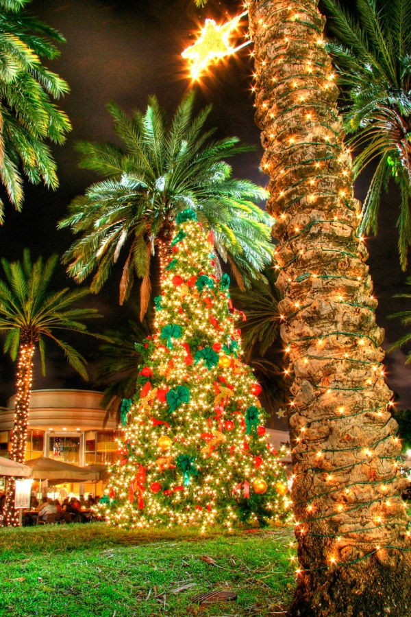 25 Hawaiian Christmas Landscape Pictures And Ideas On Pro Landscape