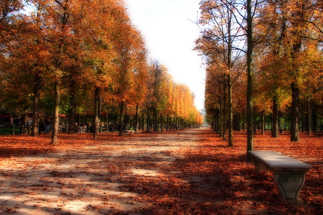 Free 3d Fall Wallpaper Paris Autumn Have You Ever Been In Paris On An Autumn