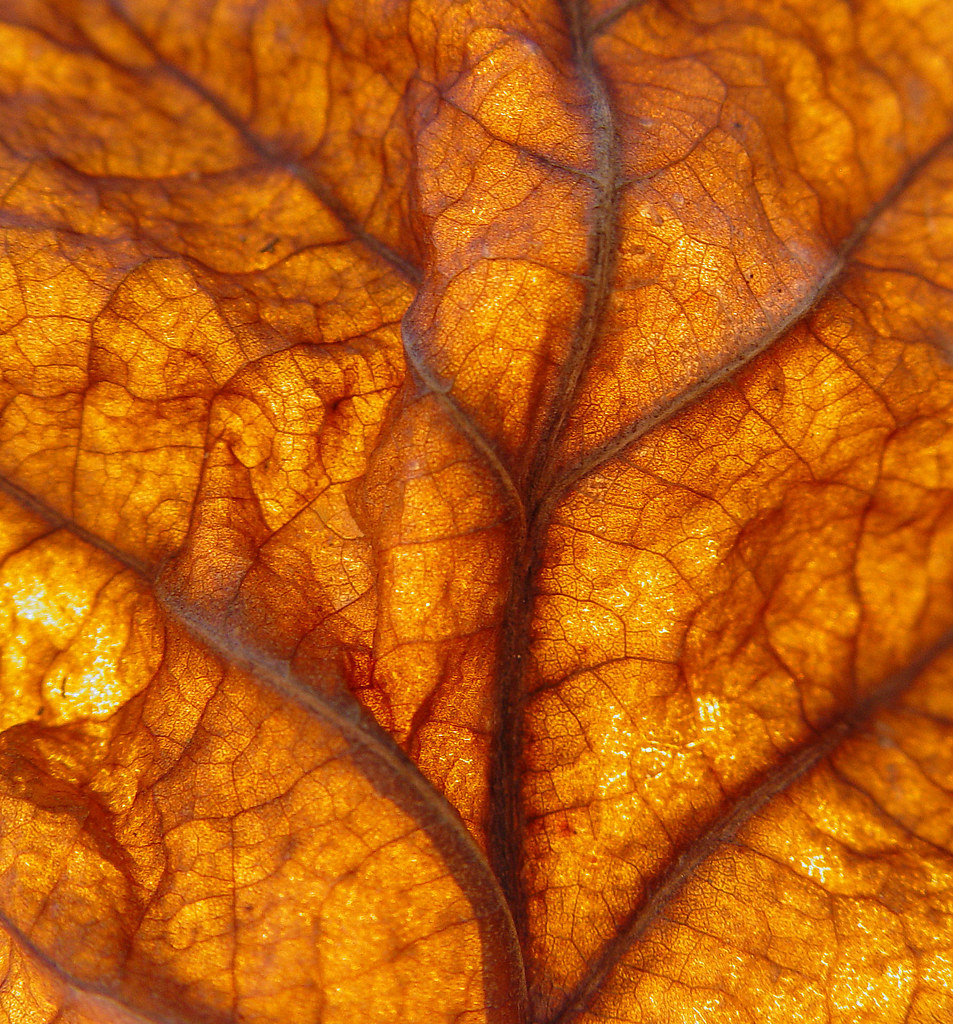 Sycamore Leaf Playing With The Autumn Leaves Last Fall