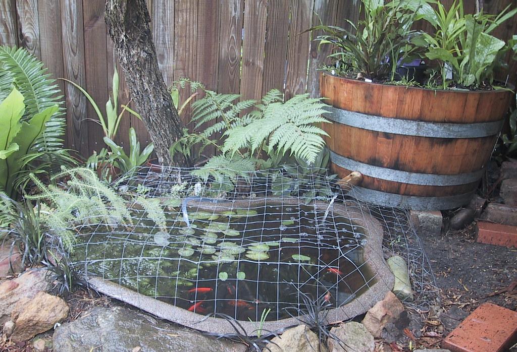 Outdoor Water Garden Ponds