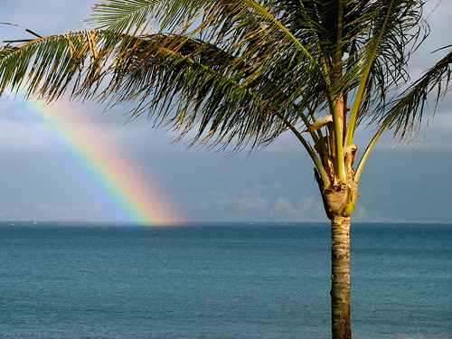 Free Mobile Wallpaper Quotes Maui Rainbow With Palm Tree A Rainbow At Napili Bay If