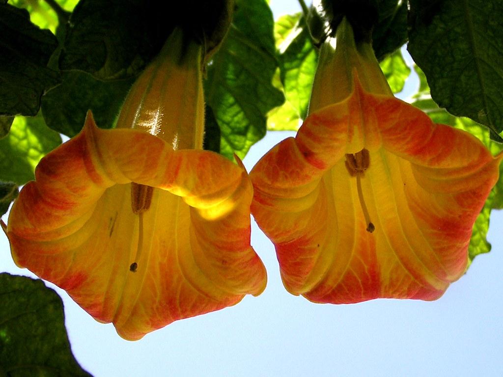 otras plantas Gran Canaria 35
