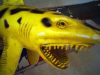 yellow shark 02 | Taken for Chase project. Bath shark toy ...