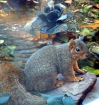 squirrel fountain | Flickr - Photo Sharing!