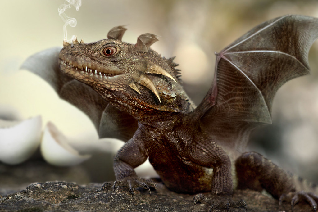 Cute Baby Lizards Wallpaper Baby Dragon This Little Baby Is Build Out Of From A