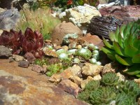 succulent rock garden | squiggle. | Flickr