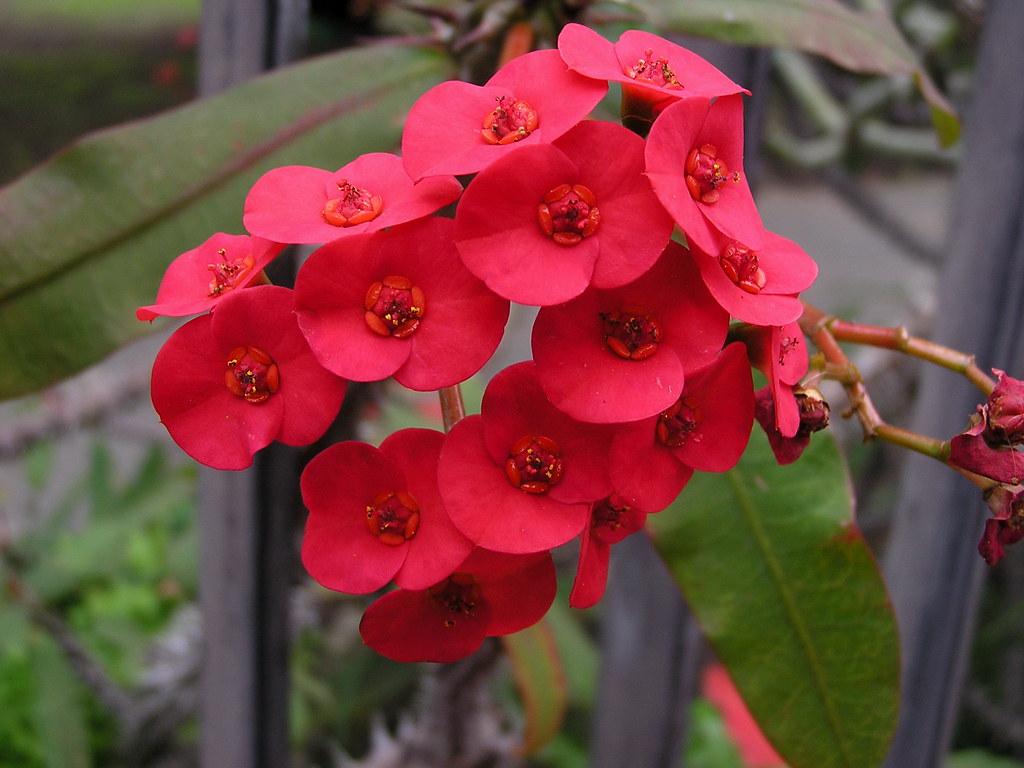 flores en el Jardin Canario Las Palmas de Gran Canaria 41