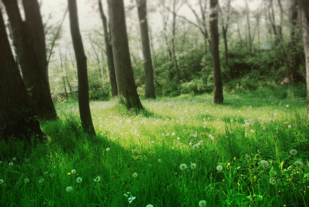 Soft Forest Peter Roome Flickr