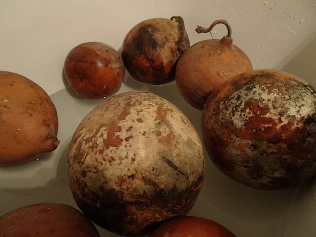 Gourds in the Bath
