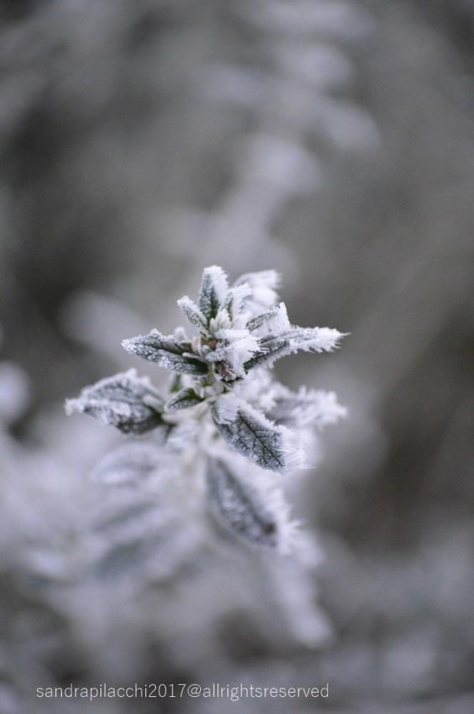 ghiaccio DSC_4451