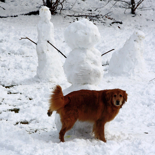 Dog Vs Snowman A Dog Leaves His Mark On A Snowman In