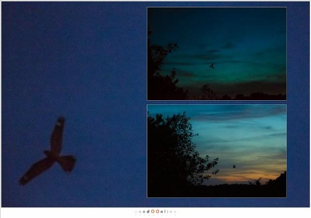 Een nachtzwaluw op de foto. Om dit mogelijk te maken was een extreem hoge ISO nodig, hoger dan wat bruikbaar is voor deze camera. (EOS 5D mark III + EF24-70L II @ 70mm | ISO12800 | f/2,8 | 1/200)