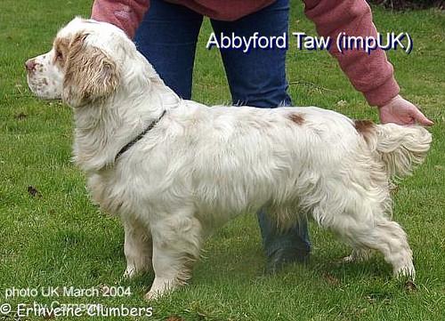 Abbyford Taw
