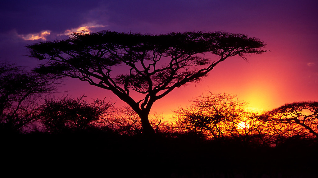 4k Wallpaper 3d National Geographic Acacia Tree Stereotype Of An African Sunset Serengeti
