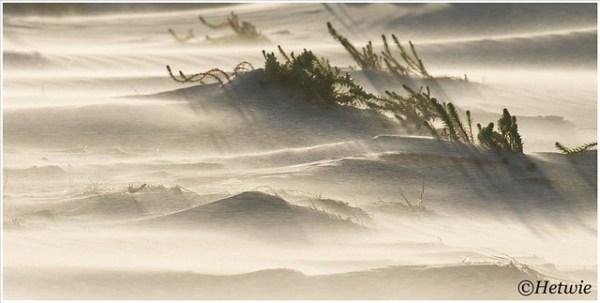 Wind in de duinen