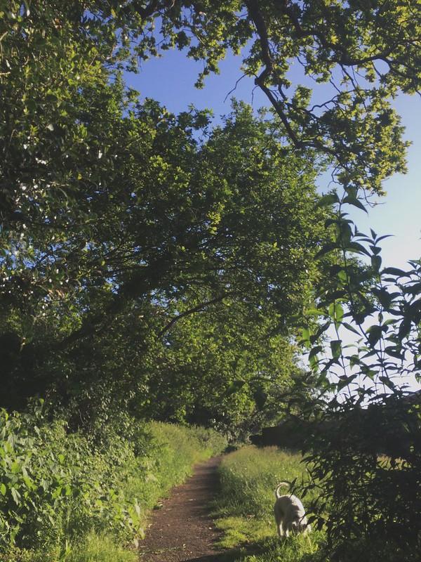 Sky during run