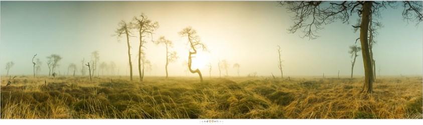 180° Panorama van de Skeleton Trees van Noir Flohay met daar de Franstalige fotografe die me onbedoeld de weg gewezen had. (8 foto's; 17mm; ISO100; f/11; t=1/25sec)