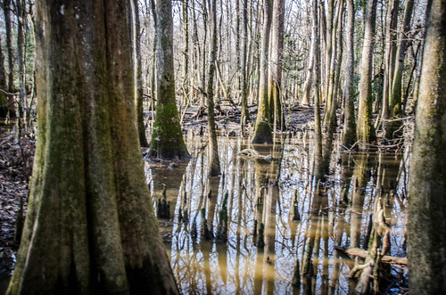 Congaree Swamp with Lowcountry Unfiltered-25