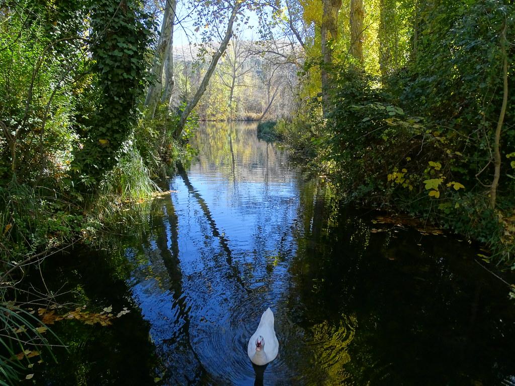 Paseo por el rio Duero Soria 13