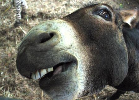 Weird Donkey  Sarah Lay  Flickr