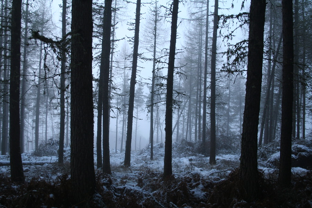 Cold Eerie Forest  View On Black  Superali007  Flickr