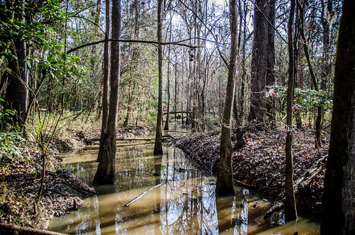 Congaree Swamp with Lowcountry Unfiltered-24