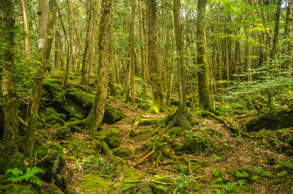 Aokigahara  Aokigahara the Sea of Trees is a region